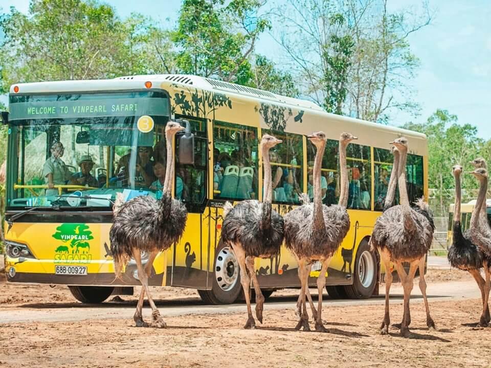 Trải nghiệm tham quan bằng xe buýt