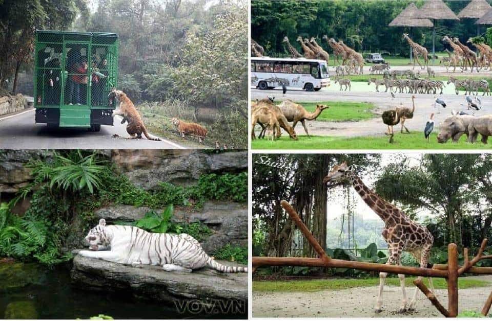 động vật hoang dã tại safari phú quốc